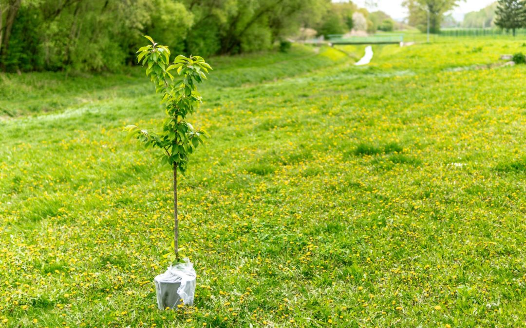 Planting a Tree in Five Simple Steps