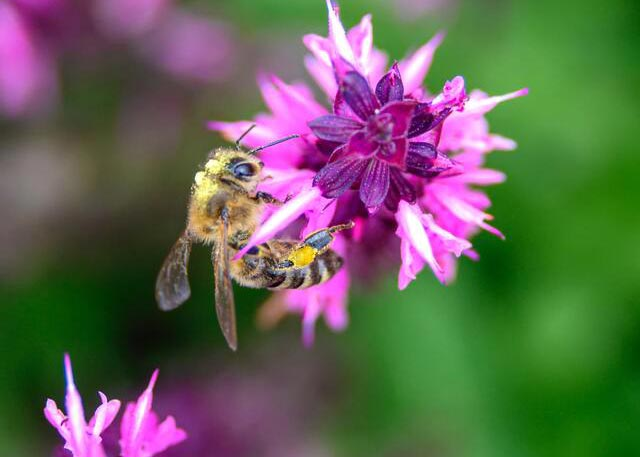 Bee Nice… Plant a Bee Garden!