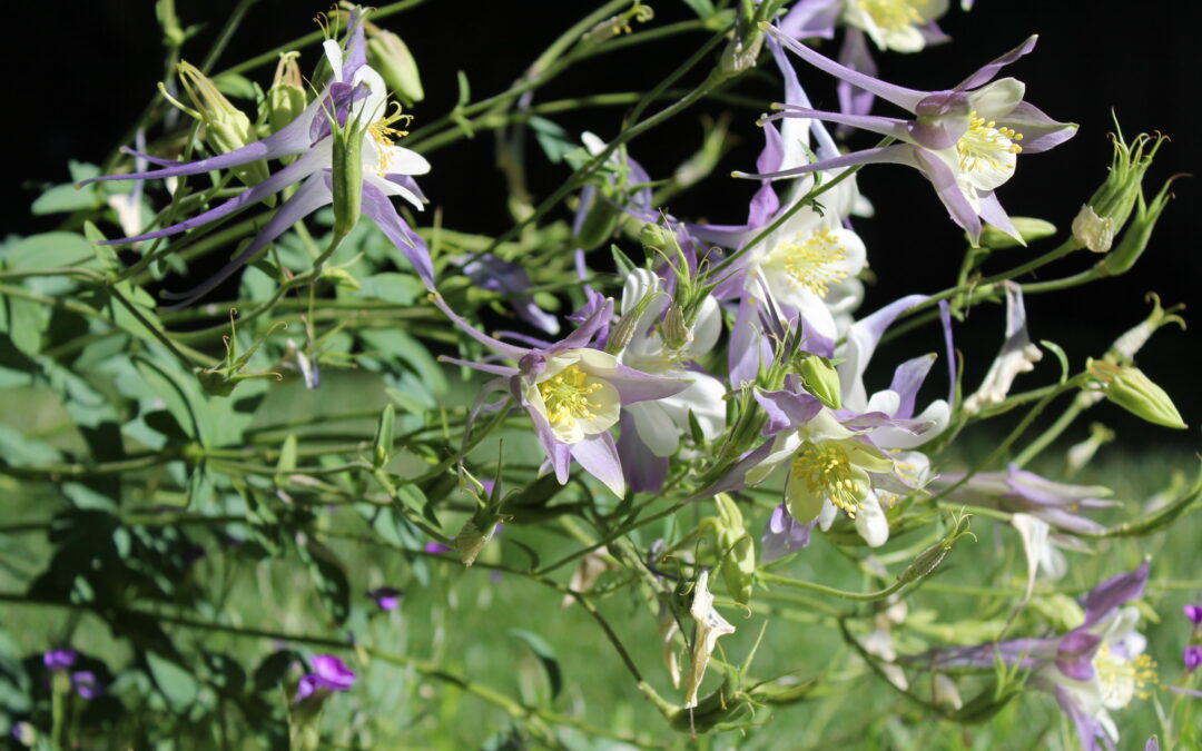 Native Utah Plants to use in a Commercial Property