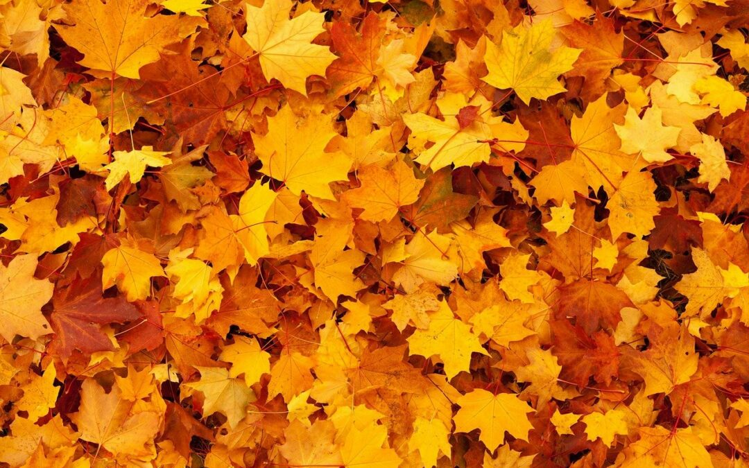 Fall Clean-up Tips: Why Leaves Change