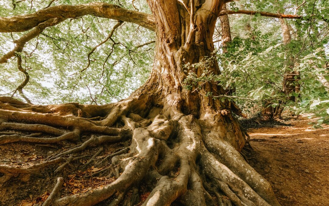 Why Healthy Roots are Necessary for Healthy Plants